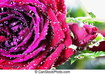 Rose bud drop macro
