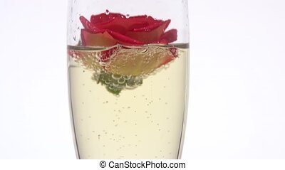 Rose bud in a glass with champagne. White background. Close up