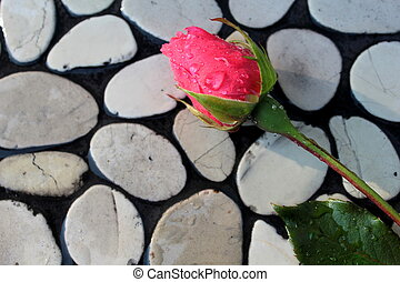 Rose bud on pebbles, close up image