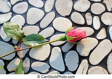 Rose bud on pebbles wall, close up image
