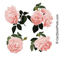 rose bunch set - Vector Illustration of rose bunch set