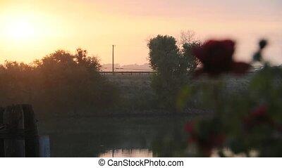Rose Bush at Sunrise