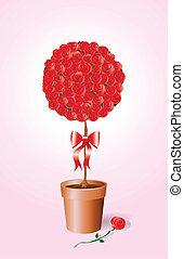 Rose bush on pink
