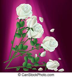rose, cadere, bianco