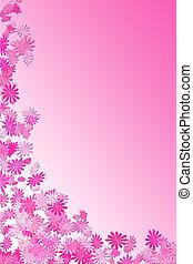 rose, cadre, pâquerette