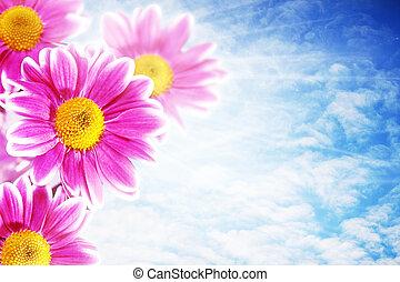 rose, cieux bleus, naturel, résumé, arrière-plans, contre, joli, fleurs