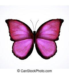 rose claire, papillon, isolated., vecteur