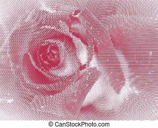 rose close up - Pink Rose. Halftone effect