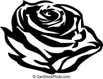 rose, contour