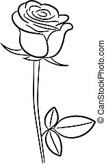 Rose contour image of vector illustrations