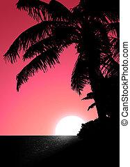 rose, coucher soleil