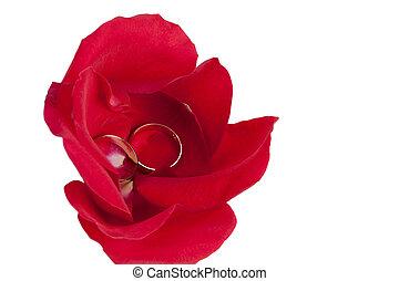 rose, couple, anneau, pétales