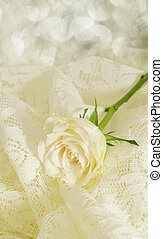 Rose cream colored - Close-up of a cream colored rose with a...
