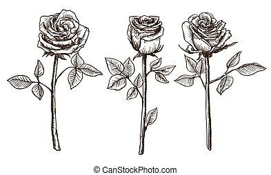 vecteur de bourgeons croquis fleur rose icons. Black Bedroom Furniture Sets. Home Design Ideas