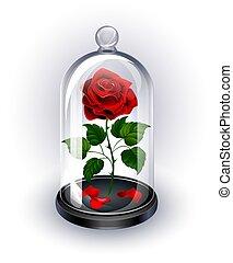 rose, dôme, sous, fond blanc, rouges