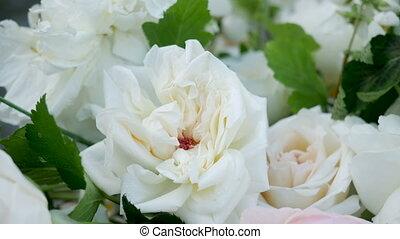 Fiori Bianchi Simili A Rose.Fiori Bianchi Albero Peonia Blu Peonia Cielo Albero Sotto