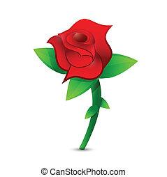 rose, design, rotes , abbildung