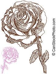rose, dessin