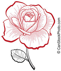 rose, dessin, main