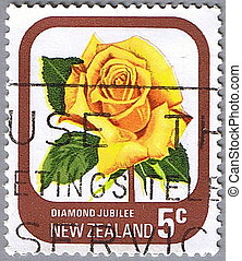 NEW ZEALAND - CIRCA 1975: A stamp printed in New Zealand shows Diamond Jubilee, series devoted to roses, circa 1975