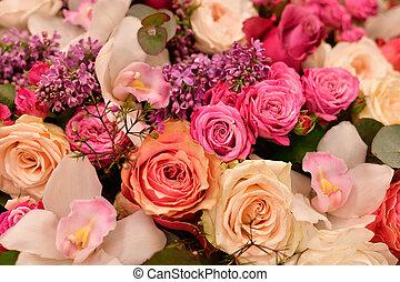 rose, differente, fiori, riprese ravvicinate, lilla