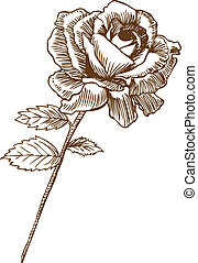 Beautiful hand drawn rose bloom stem with leaves in a sepia tone.