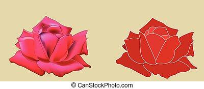 rose, due, rosso
