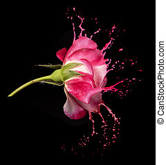rose, eclabousse, rouges