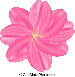 rose, ensemble, rose, petals., fond, blanc