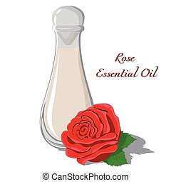 Rose essential oil with a bud in the foreground isolated on ...
