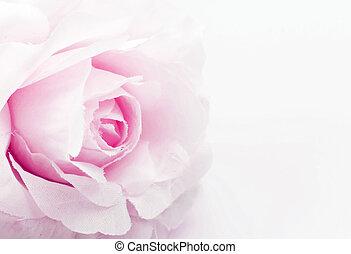 rose fake flower on white background, soft focus.