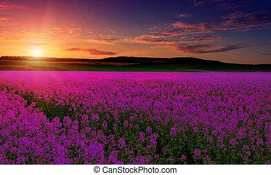 rose, fantastique, paysage, pré, coloré, pourpre, sur, ciel, imagination, champ, fleurs
