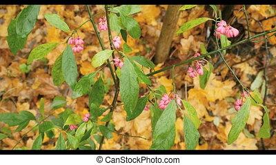 rose, feuilles automne, fleurs