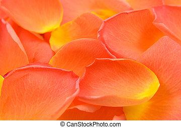 rose, feuilles, fond