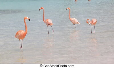 rose, flamants rose, plage