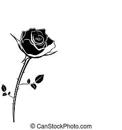rose, fleur blanche, silhouette, fond