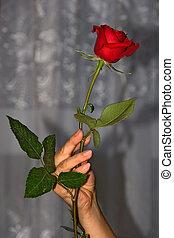 rose, fleurs, 01