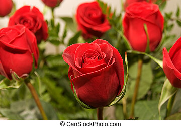rose, fleurs, 07