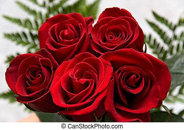 rose, fleurs, 10