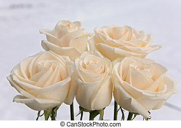 rose, fleurs, 12