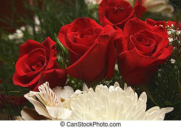 rose, fleurs, 14