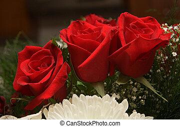 rose, fleurs, 15