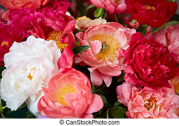 rose, fleurs blanches, pivoine, rouges