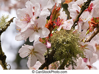 rose, fleurs, cerise, washington, vert, mousse, fleurs ressort