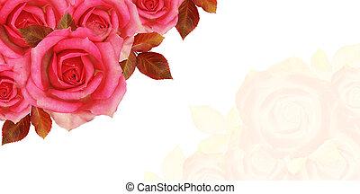 rose, fleurs, coin