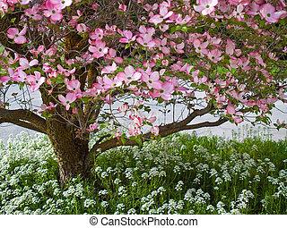 rose, fleurs, parer, a, arbre cornouiller, dans, printemps