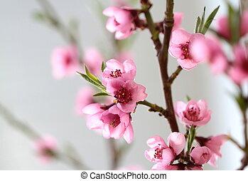 rose, fleurs ressort, branche