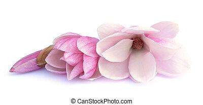 rose, flowe, magnolia