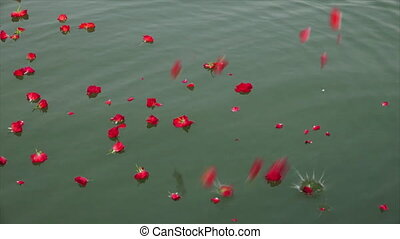 Rose Flower being scattered on the River, Ganga - Medium...