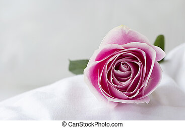 Rose flower on the white bed
